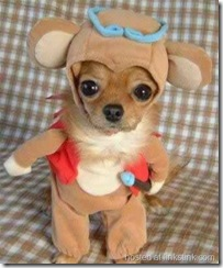 cutest-dog-costume