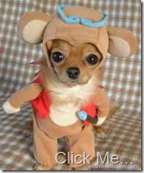 cutest-dog-costume